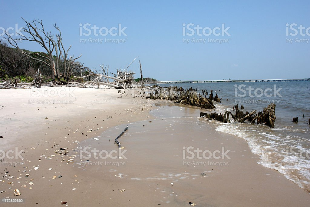Driftwood Beach 8 royalty-free stock photo