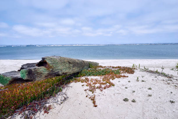 driftwood beached on Silverstrand beach, San Diego County stock photo