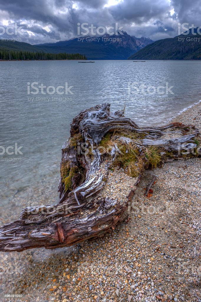 Driftwood by the lake. stock photo