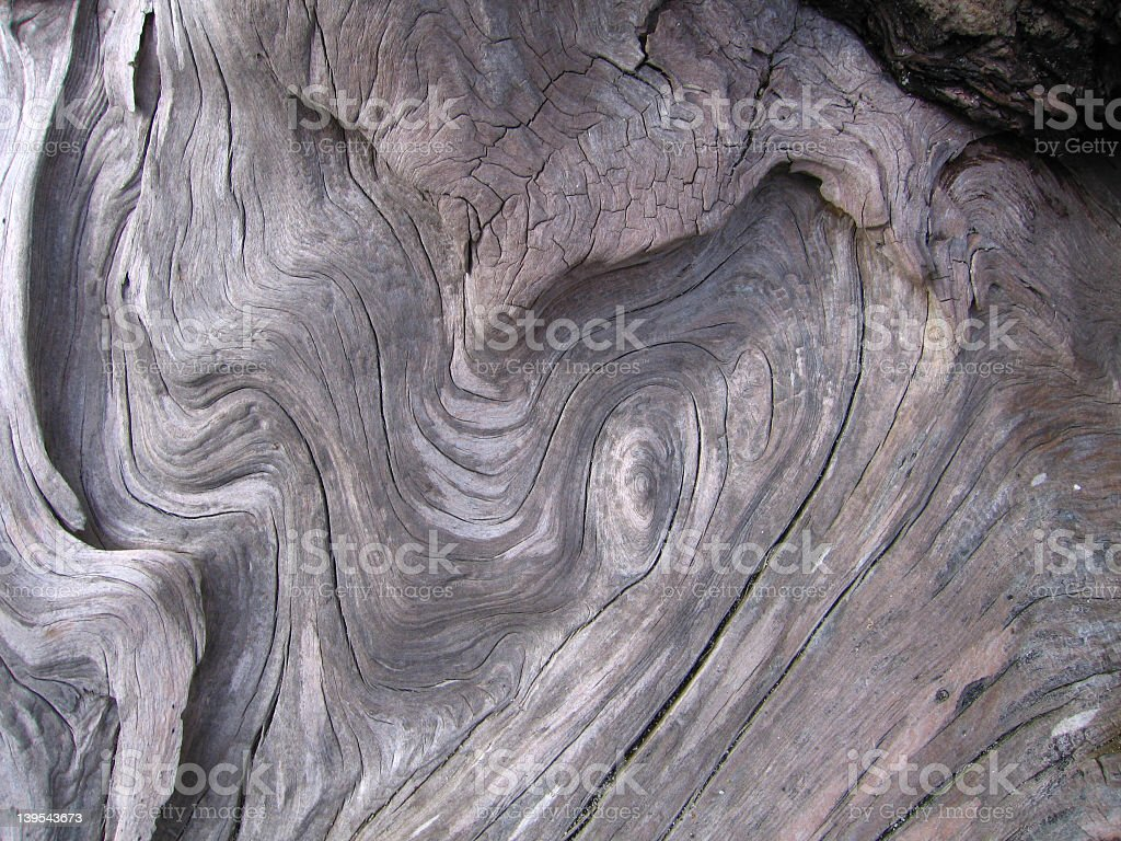 Driftwood Curls royalty-free stock photo