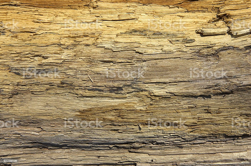 Driftwood detail royalty-free stock photo