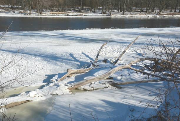 driftwood frozen onto mississippi river ice - jeff wood stock-fotos und bilder