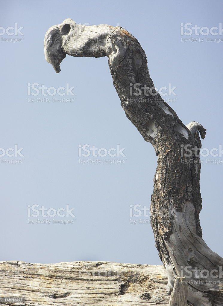 Driftwood Hand Arm Proboscis Grotesque Abstract royalty-free stock photo