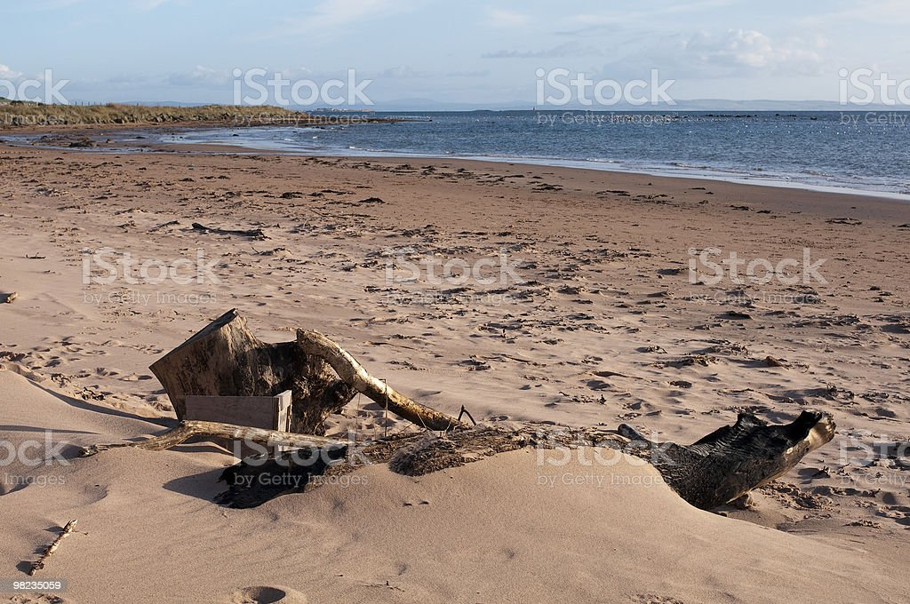 Driftwood in sabbia foto stock royalty-free