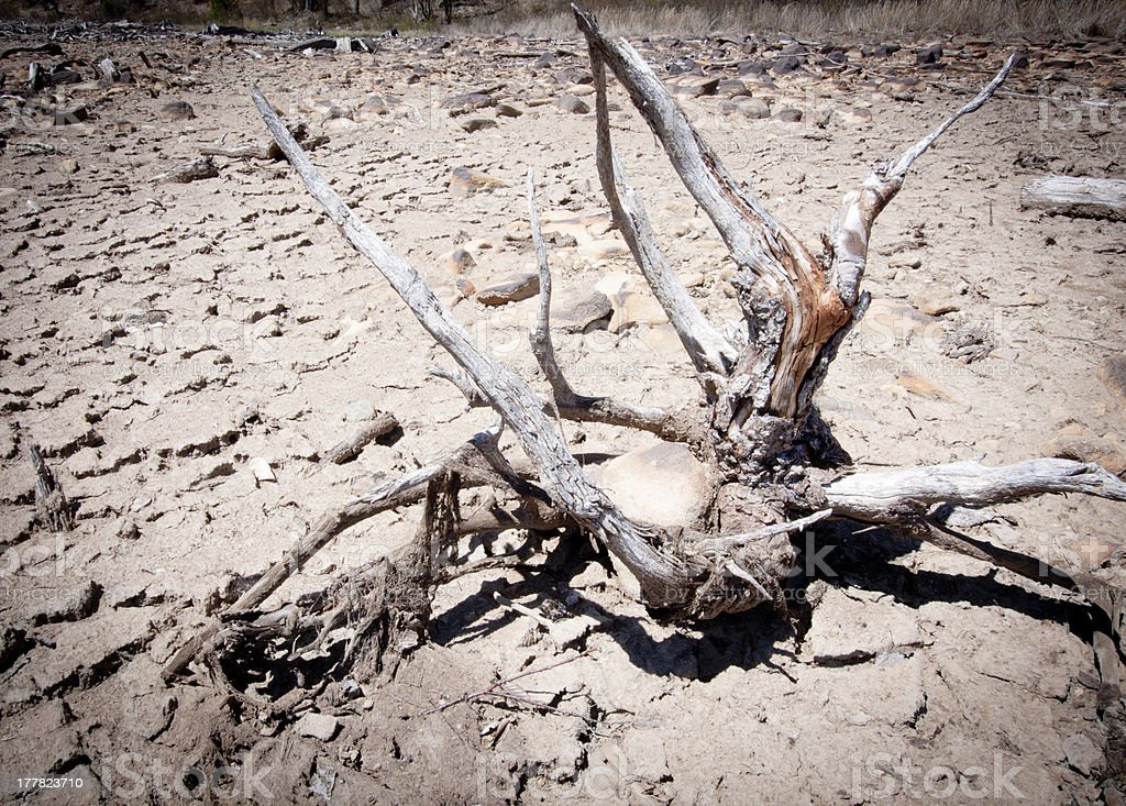 Driftwood In The Dried Out Mud stock photo