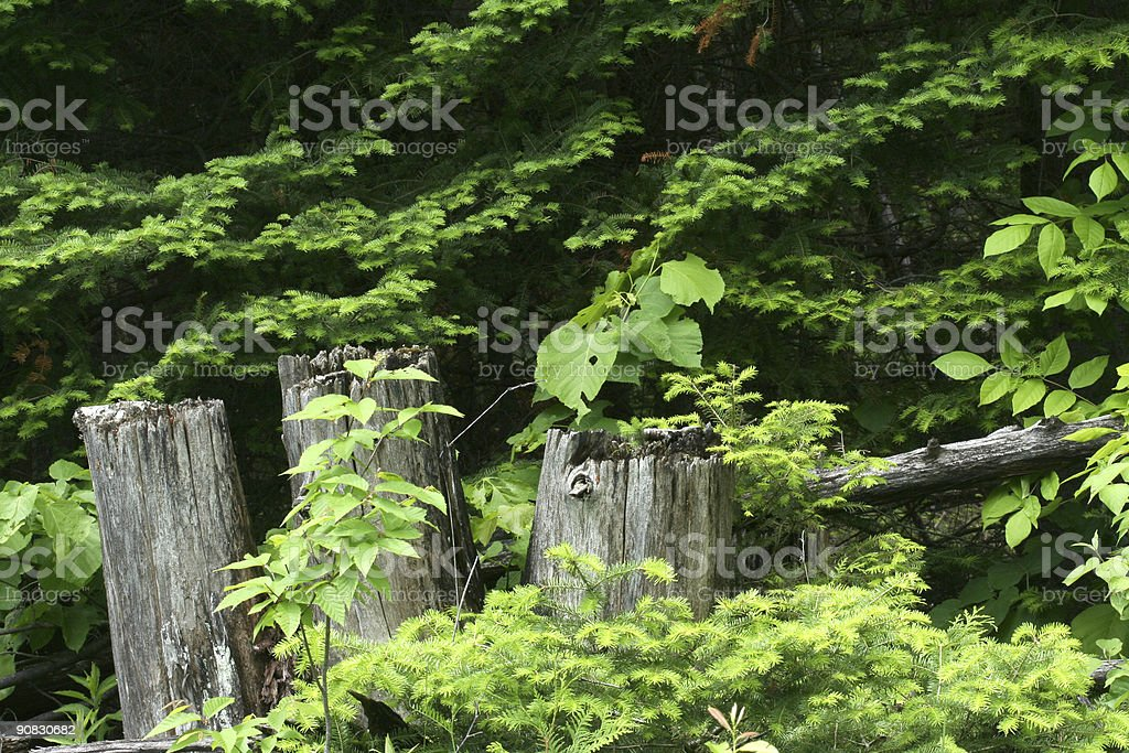Driftwood in trees royalty-free stock photo