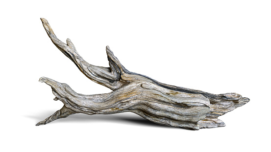 driftwood isolated on white background, aged branch