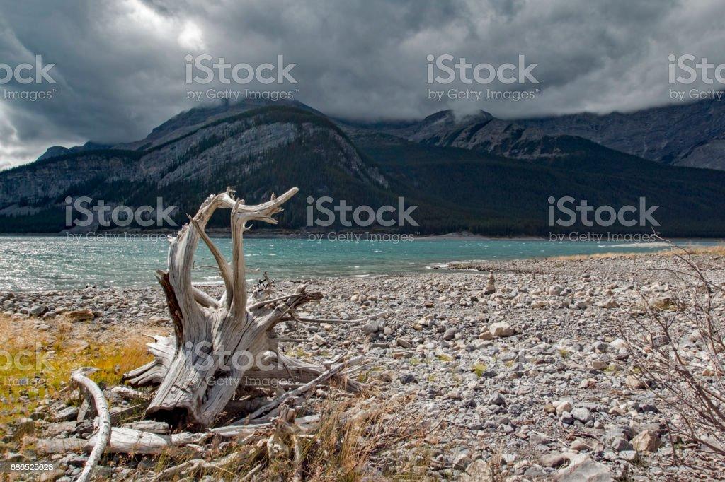 Driftwood landscape foto stock royalty-free