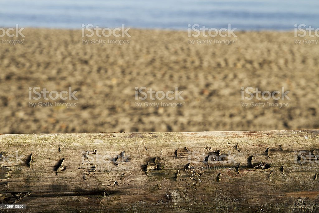 Driftwood Log at the Beach royalty-free stock photo