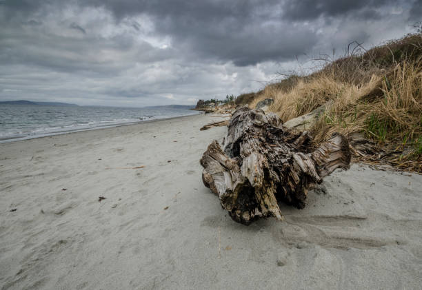 Driftwood Log on a Beach stock photo