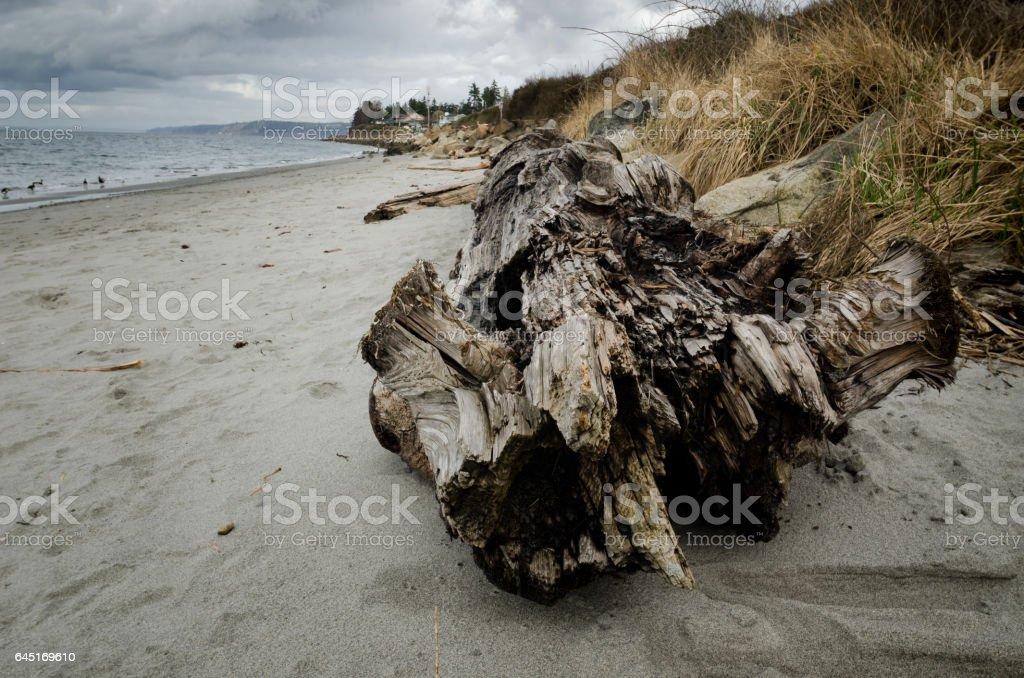 Driftwood Log on a Beach stock photo