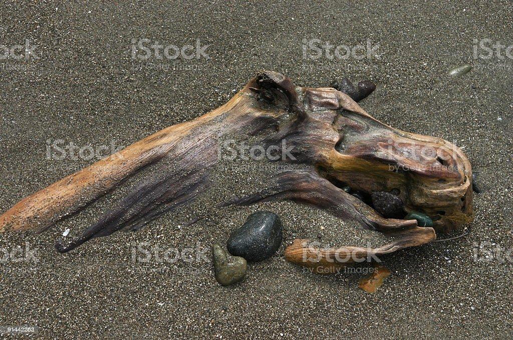 Driftwood Moose Head royalty-free stock photo