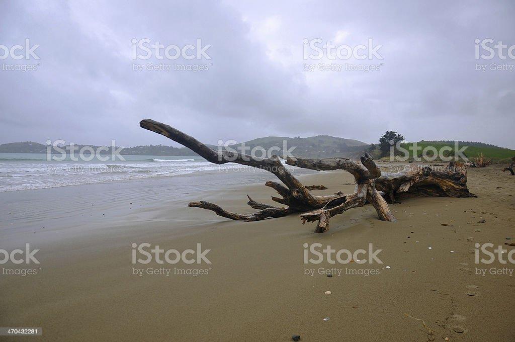 Driftwood on a Beach stock photo