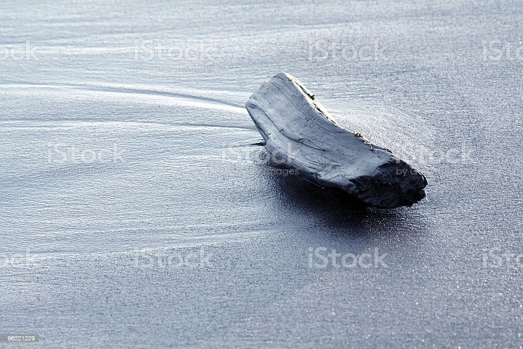 driftwood on a beach royalty-free stock photo