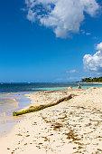 Driftwood on a Caribbean beach. Dominican Republic.