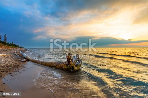 Driftwood on a Lake Huron beach - Pinery Provincial Park, Ontario, Canada