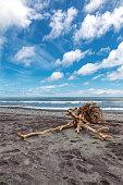 Driftwood on an isolated beach, South Island, New Zealand.