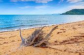 Driftwood on an isolated beach
