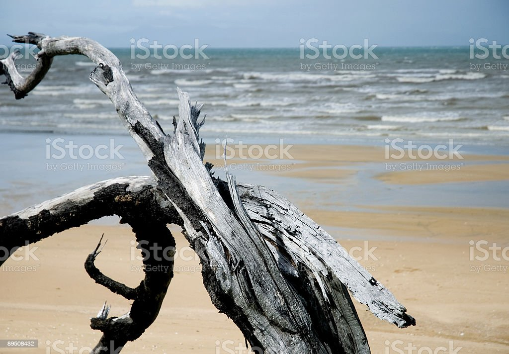 Driftwood on beach royalty-free stock photo