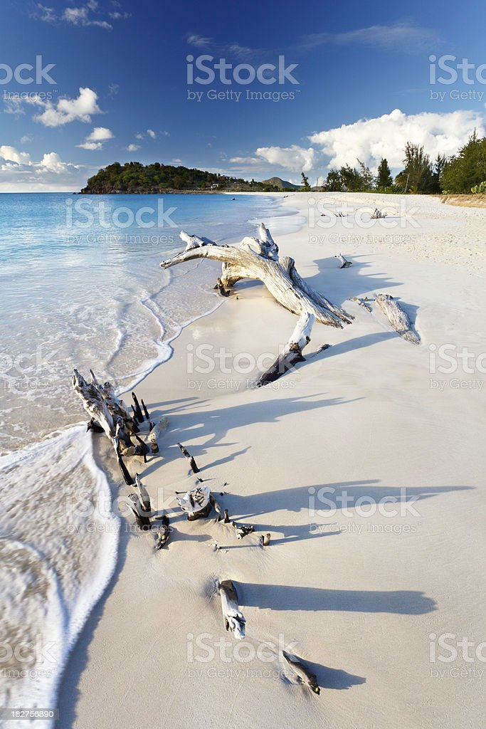 Driftwood On Caribbean Beach royalty-free stock photo