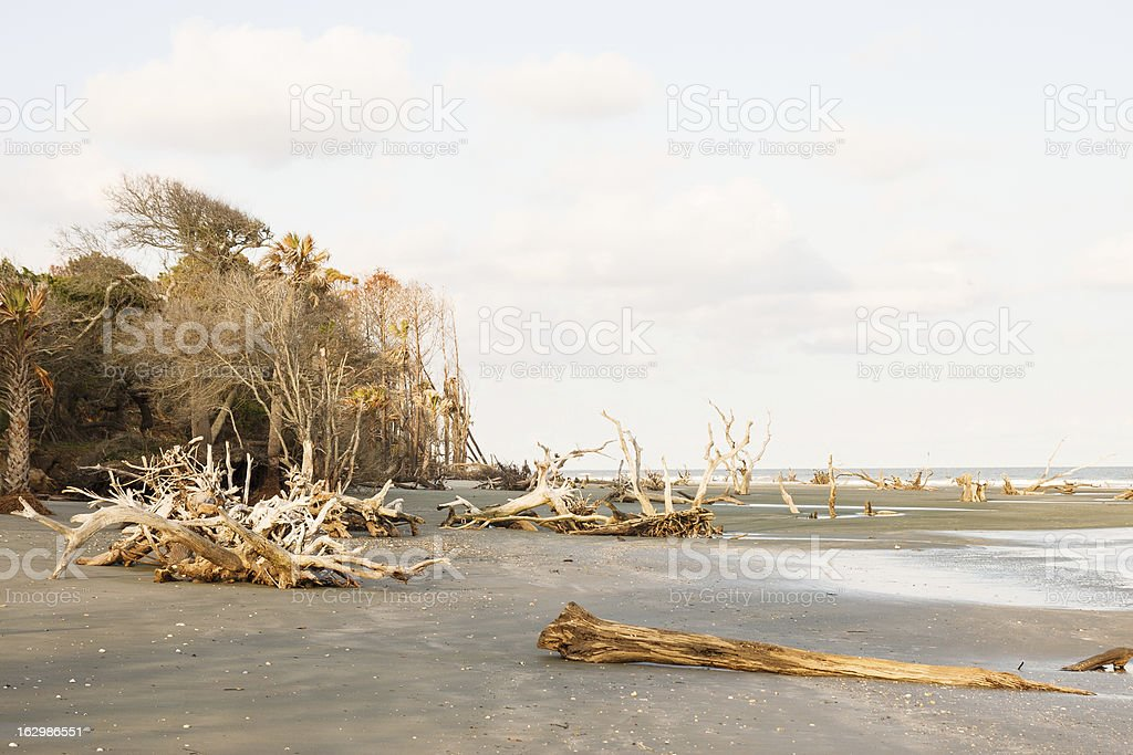 Driftwood on Empty Beach at Sunset royalty-free stock photo