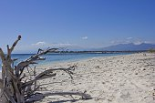 Driftwood on Gili Islands white sand beach in Indonesia