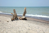 These pieces of driftwood resemble a sculpture made by nature. number-1Please see more images in my WATER EVERYWHERE! and TREES LB's.  Thank you.