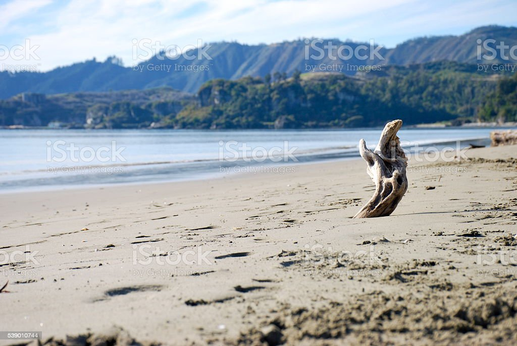 Driftwood on Pohara Beach, Takaka in Golden Bay, NZ stock photo