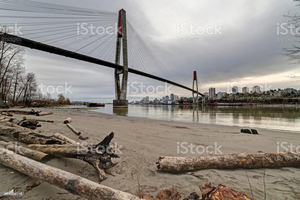 driftwood on river beach stock photo