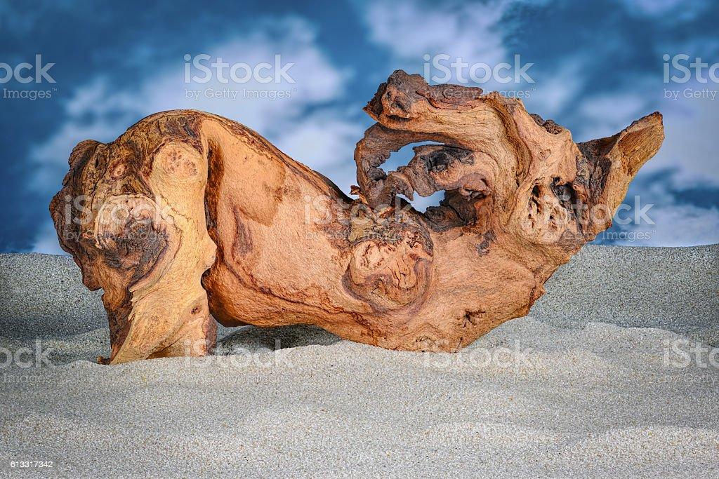 Driftwood (Mopani) on sand – Foto