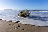 driftwood washed up on shore