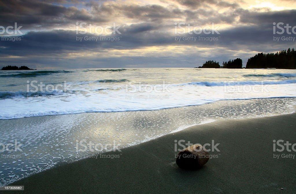 Driftwood on the Beach near Tofino British Columbia royalty-free stock photo