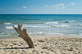 Driftwood on a sandy beach with sea in the background
