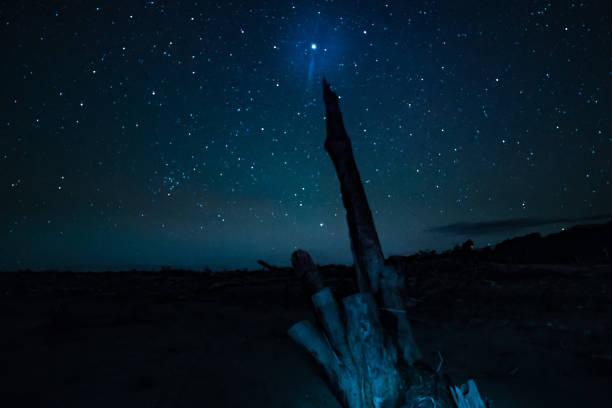 treibholz am strand schmollend, des hellsten sterns - treibholz wandkunst stock-fotos und bilder