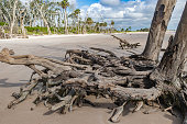 Dead Trees Along Beautiful Beaches of Florida