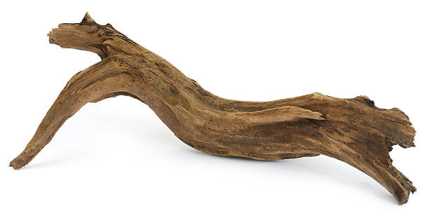 Driftwood over white background Driftwood over white background driftwood stock pictures, royalty-free photos & images