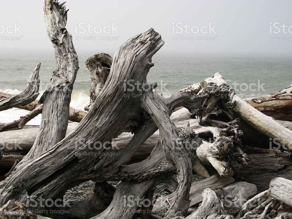 Driftwood Pacific Ocean Coast stock photo