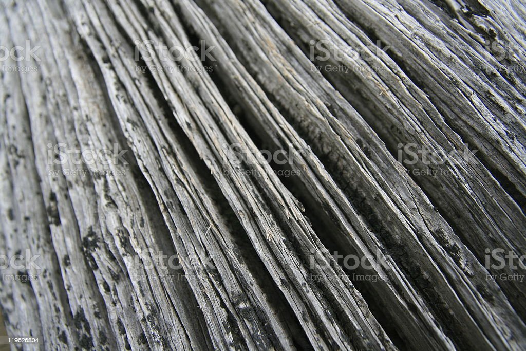 Driftwood royalty-free stock photo