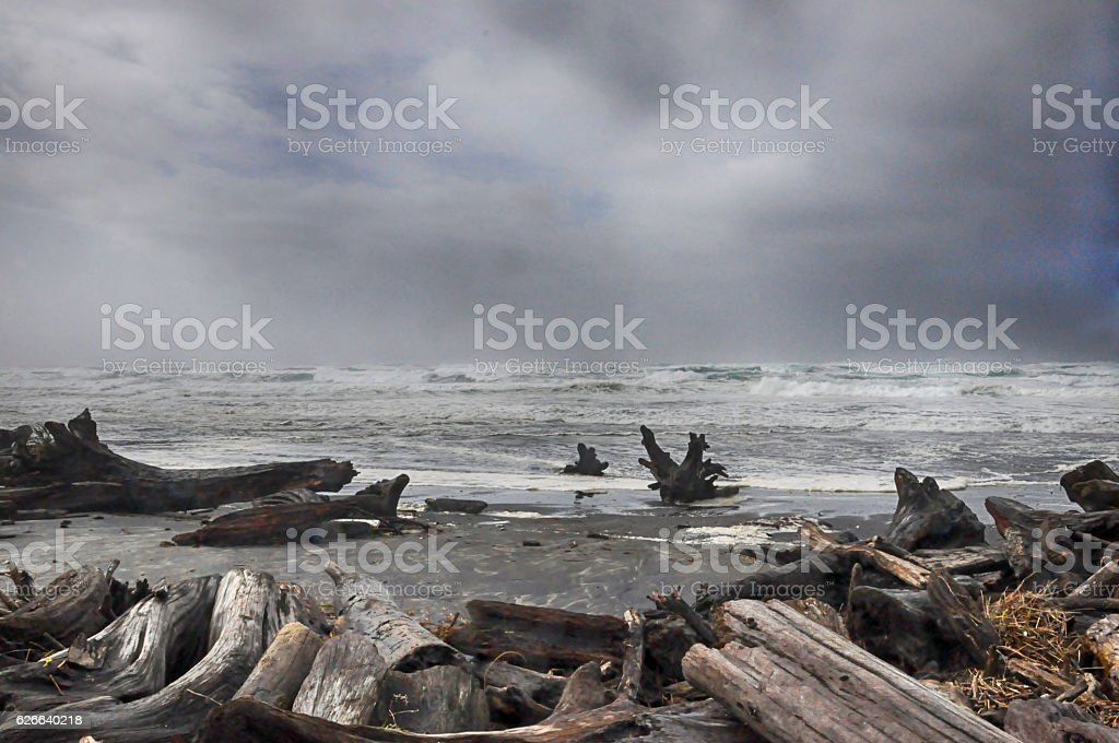 driftwood stock photo
