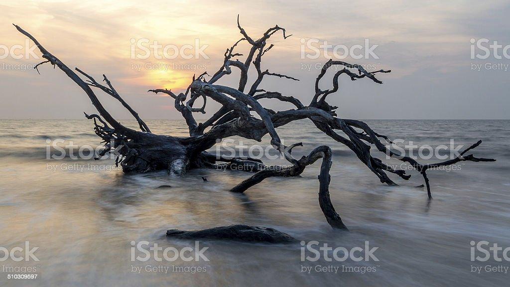 Driftwood Sunrise stock photo