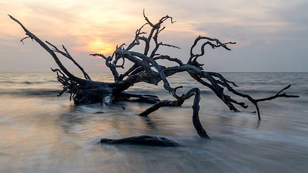 driftwood-sunrise - die toteninsel stock-fotos und bilder