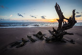 Photo taken at Big Talbot Island at sunrise of a piece of driftwood