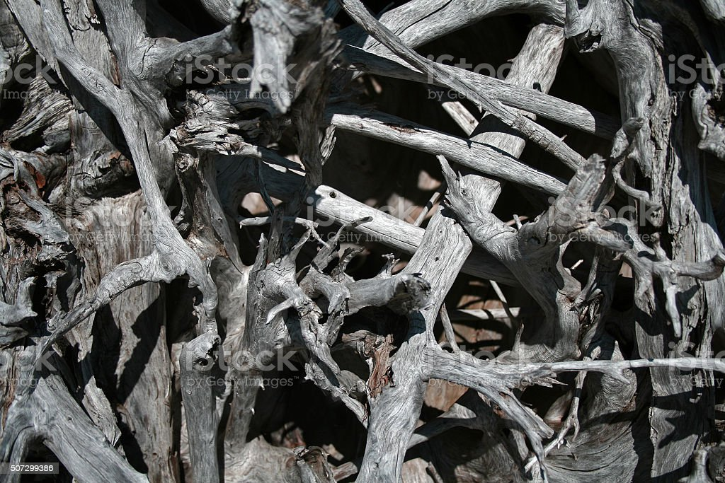 Driftwood Wall stock photo