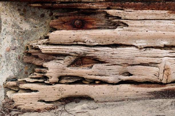 treibholz mit verrosteten schrauben gegen eine betonwand stein vintage grunge hintergrund - treibholz wandkunst stock-fotos und bilder