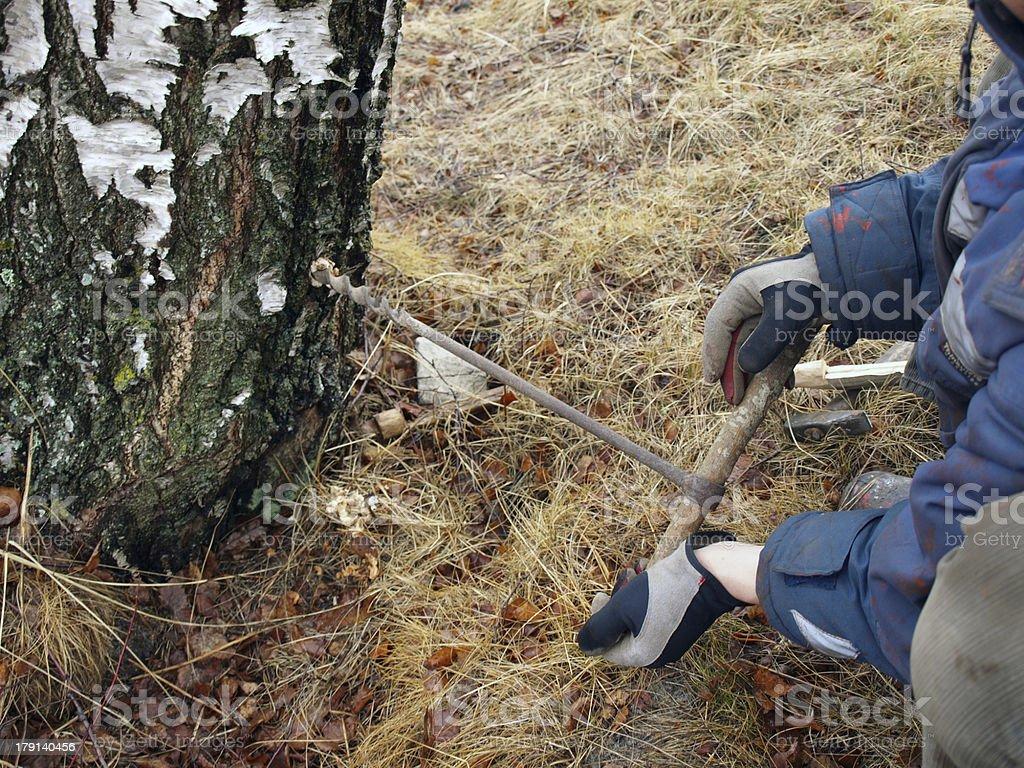 Drill birch sap foto