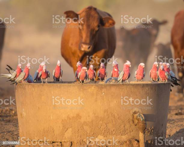 Photo of Drink at the Trough