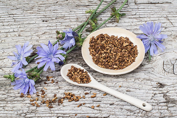 Drink from chicory and blooming chicory stock photo