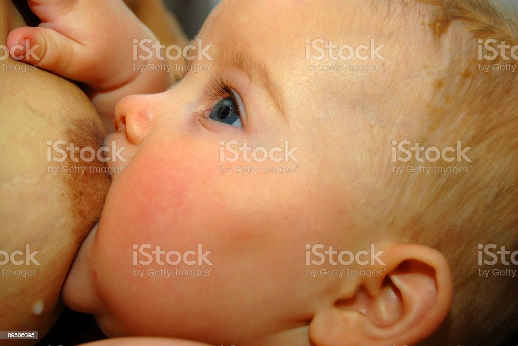 Drinking Newborn royalty-free stock photo
