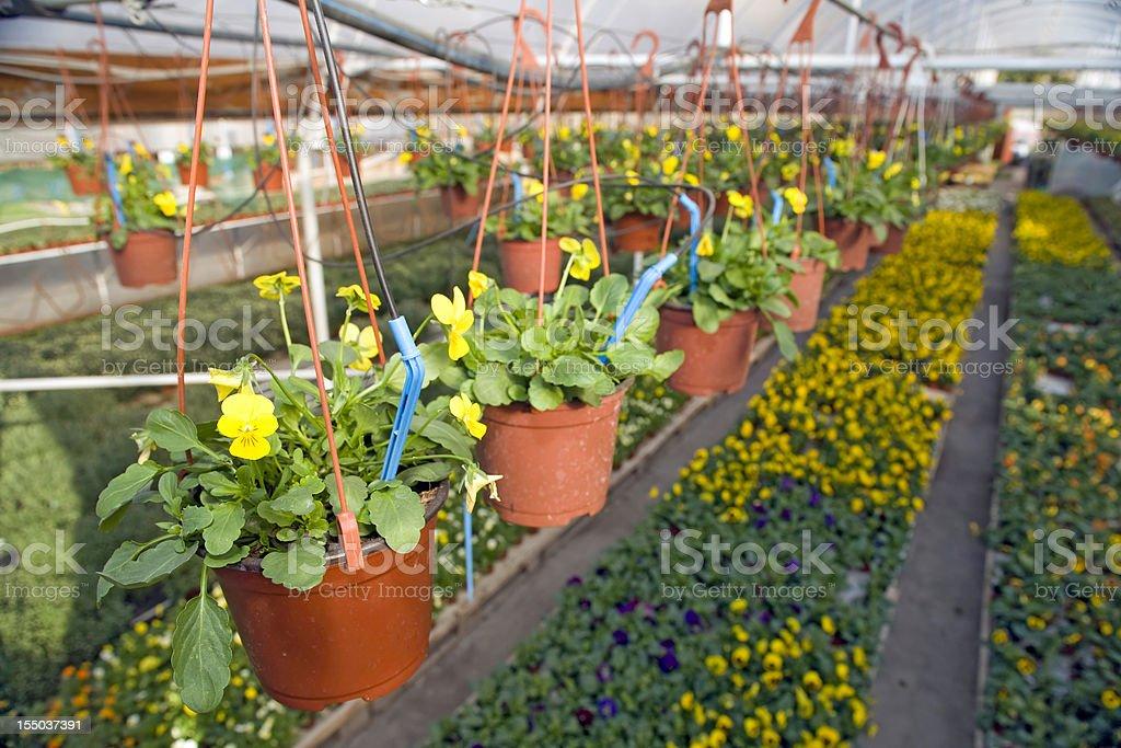 Drip irrigation stock photo