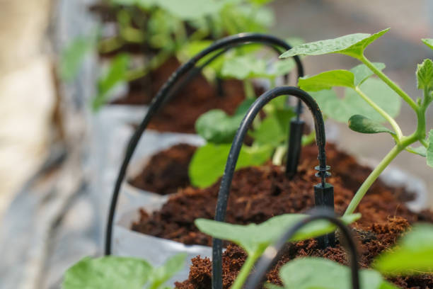 Tropfbewässerungssystem in Melonenfarm – Foto